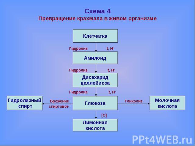 Схема 4Превращение крахмала в живом организме Гидролиз t, H+ Гидролиз t, H+ Гидролиз t, H+ Брожение Гликолиз спиртовое [O]
