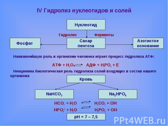 IV Гидролиз нуклеотидов и солей Гидролиз ФерментыНаиважнейшую роль в организме человека играет процесс гидролиза АТФ:АТФ + Н2О АДФ + Н3РО4 + ЕНеоценима биологическая роль гидролиза солей входящих в состав нашего организмаНСО3- + Н2О Н2СО3 + ОН-НРО42…
