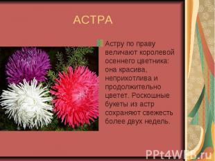 АСТРА Астру по праву величают королевой осеннего цветника: она красива, неприхот