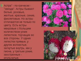 """Астра"""" - по-гречески - """"звезда"""". Астры бывают белые, розовые, желтые, красные, с"""