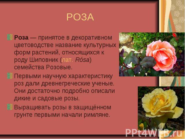РОЗА Роза— принятое в декоративном цветоводстве название культурных форм растений, относящихся к роду Шиповник (лат.Rósа) семейства Розовые.Первыми научную характеристику роз дали древнегреческие ученые. Они достаточно подробно описали дикие и сад…