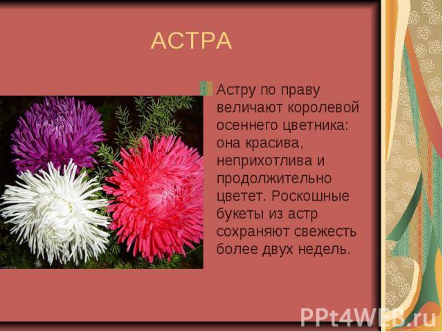 АСТРА Астру по праву величают королевой осеннего цветника: она красива, неприхотлива и продолжительно цветет. Роскошные букеты из астр сохраняют свежесть более двух недель.
