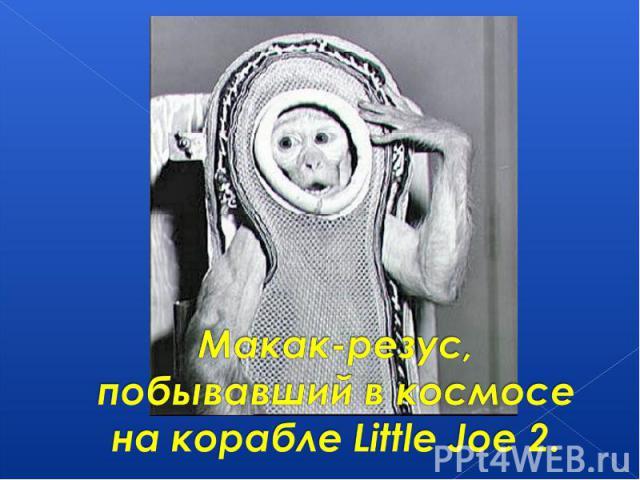 Макак-резус,побывавший в космосе на корабле Little Joe 2.