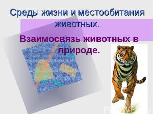 Среды жизни и местообитания животных. Взаимосвязь животных в природе.