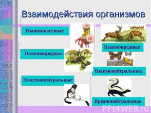 Взаимодействия организмов