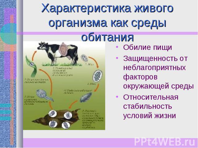 Характеристика живого организма как среды обитания Обилие пищиЗащищенность от неблагоприятных факторов окружающей средыОтносительная стабильность условий жизни
