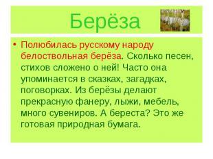 Берёза Полюбилась русскому народу белоствольная берёза. Сколько песен, стихов сл