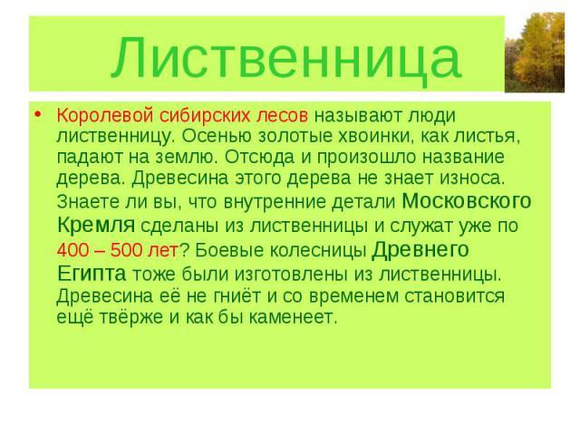 Лиственница Королевой сибирских лесов называют люди лиственницу. Осенью золотые хвоинки, как листья, падают на землю. Отсюда и произошло название дерева. Древесина этого дерева не знает износа. Знаете ли вы, что внутренние детали Московского Кремля …