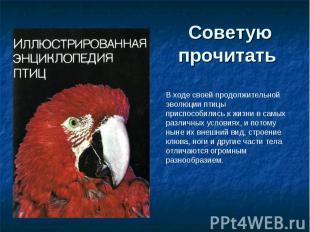 Советую прочитать В ходе своей продолжительной эволюции птицы приспособились к ж