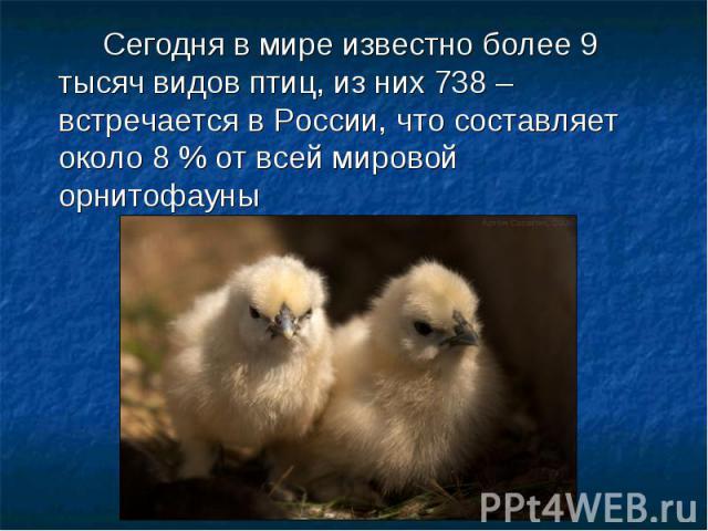 Сегодня в мире известно более 9 тысяч видов птиц, из них 738 – встречается в России, что составляет около 8 % от всей мировой орнитофауны