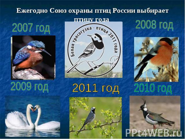 Ежегодно Союз охраны птиц России выбирает птицу года