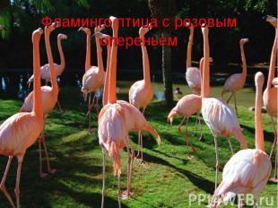 Фламинго птица с розовым опереньем