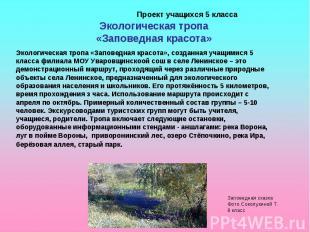 Проект учащихся 5 класса Экологическая тропа «Заповедная красота»Экологическая т