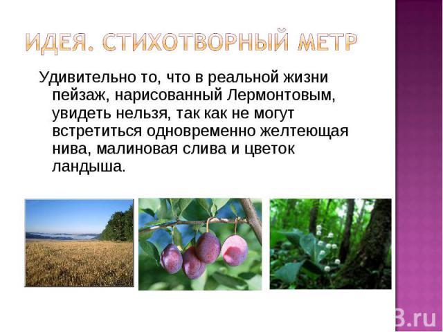 Идея. Стихотворный метрУдивительно то, что в реальной жизни пейзаж, нарисованный Лермонтовым, увидеть нельзя, так как не могут встретиться одновременно желтеющая нива, малиновая слива и цветок ландыша.