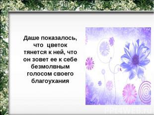 Даше показалось, что цветок тянется к ней, что он зовет ее к себе безмолвным гол