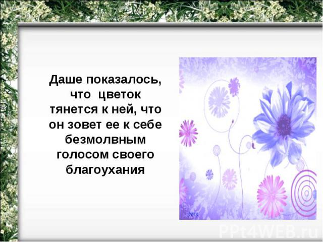 Даше показалось, что цветок тянется к ней, что он зовет ее к себе безмолвным голосом своего благоухания
