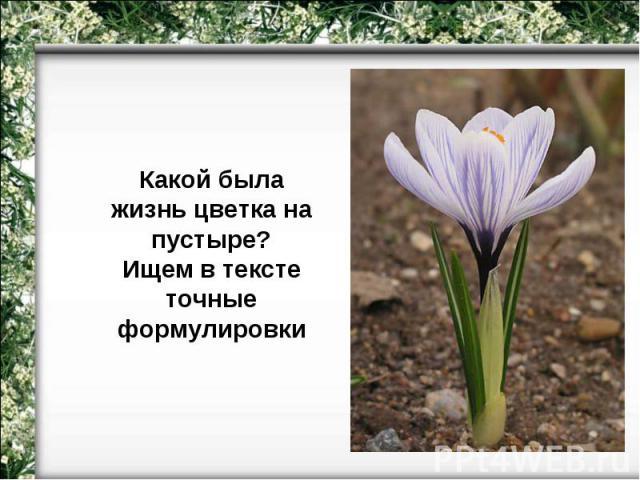Какой была жизнь цветка на пустыре?Ищем в тексте точные формулировки