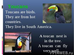 ToucansToucans are birds.They are from hot countries. They live in South America