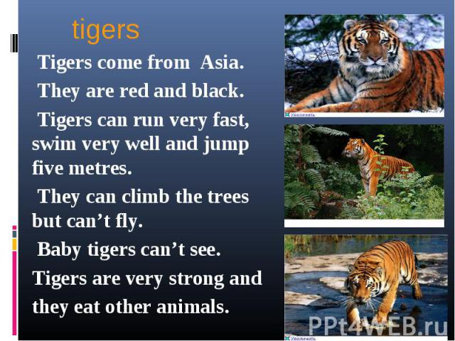 tigers Tigers come from Asia. They are red and black. Tigers can run very fast, swim very well and jump five metres. They can climb the trees but can't fly. Baby tigers can't see.Tigers are very strong and they eat other animals.