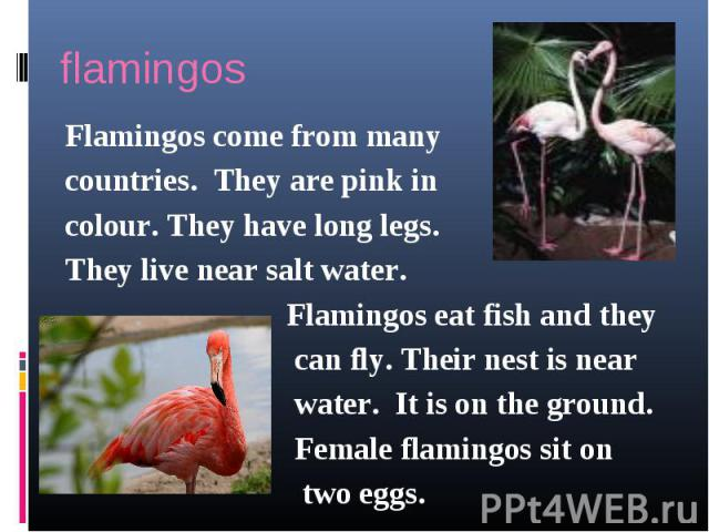 flamingosFlamingos come from many countries. They are pink incolour. They have long legs.They live near salt water. Flamingos eat fish and they can fly. Their nest is near water. It is on the ground. Female flamingos sit on two eggs.