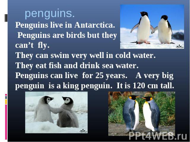 penguins.Penguins live in Antarctica. Penguins are birds but theycan't fly.They can swim very well in cold water.They eat fish and drink sea water.Penguins can live for 25 years. A very big penguin is a king penguin. It is 120 cm tall.