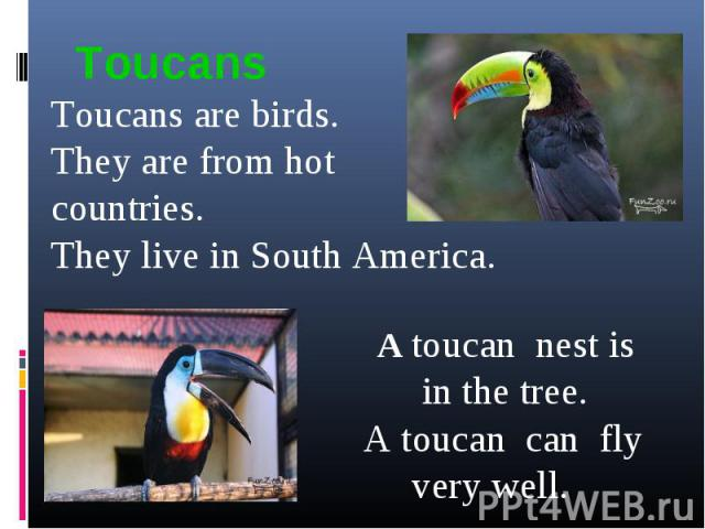 ToucansToucans are birds.They are from hot countries. They live in South America. A toucan nest is in the tree. A toucan can fly very well.