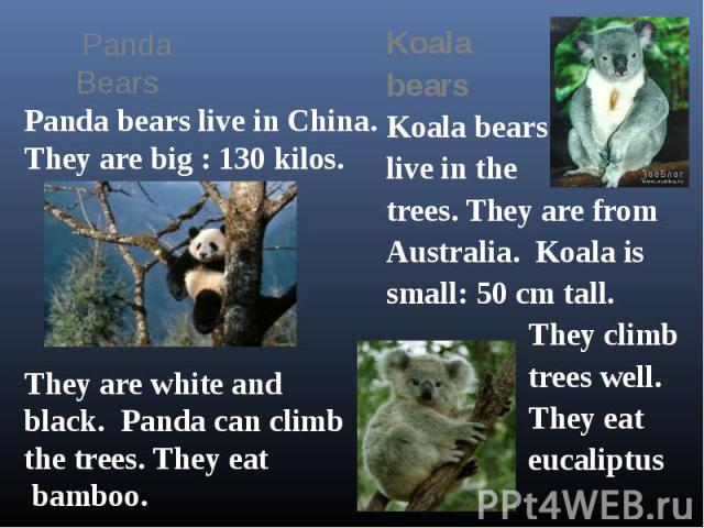 Panda Bears Panda bears live in China.They are big : 130 kilos.They are white and black. Panda can climbthe trees. They eat bamboo.KoalabearsKoala bearslive in the trees. They are from Australia. Koala is small: 50 cm tall. They climb trees well. Th…