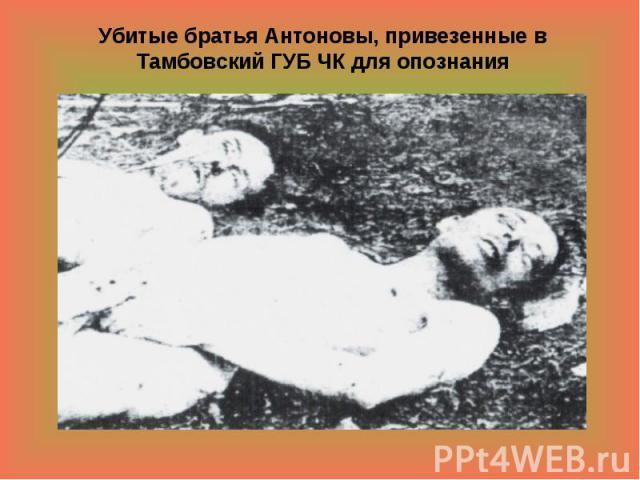 Убитые братья Антоновы, привезенные в Тамбовский ГУБ ЧК для опознания