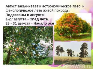 Август заканчивает и астрономическое лето, и фенологическое лето живой природы.