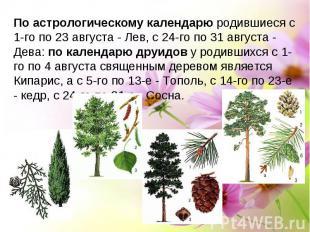 По астрологическому календарю родившиеся с 1-го по 23 августа - Лев, с 24-го по