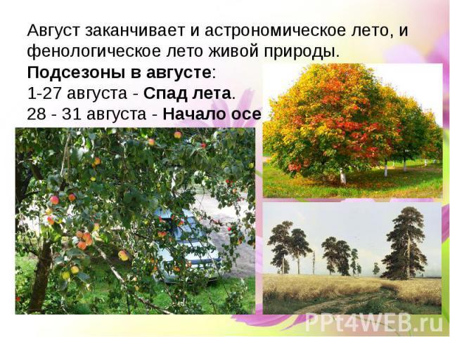 Август заканчивает и астрономическое лето, и фенологическое лето живой природы.Подсезоны в августе:1-27 августа - Спад лета.28 - 31 августа - Начало осени.