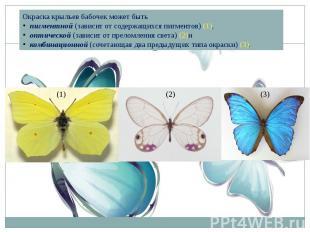 Окраска крыльев бабочек может бытьпигментной(зависит от содержащихся пигментов