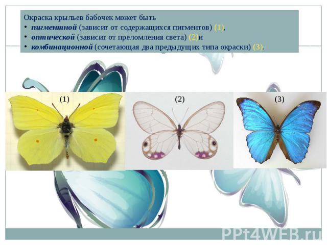 Окраска крыльев бабочек может бытьпигментной(зависит от содержащихся пигментов) (1),оптической(зависит от преломления света) (2)икомбинационной(сочетающая два предыдущих типа окраски) (3).