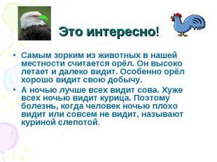Это интересно!Самым зорким из животных в нашей местности считается орёл. Он высо