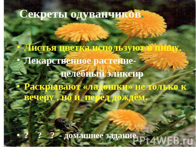 Секреты одуванчиков.Листья цветка используют в пищу.Лекарственное растение- целебный эликсирРаскрывают «ладошки» не только к вечеру , но и перед дождём.? ? ? - домашнее задание