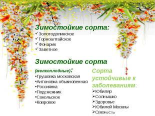 Зимостойкие сорта:ЗолотодолинскоеГорноалтайскоеФонарикЗаветноеЗимостойкие сорта