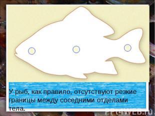 У рыб, как правило, отсутствуют резкие границы между соседними отделами тела.