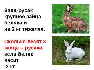 Заяц-русак крупнее зайца беляка и на 2 кг тяжелее.Сколько весят 3 зайца – русака