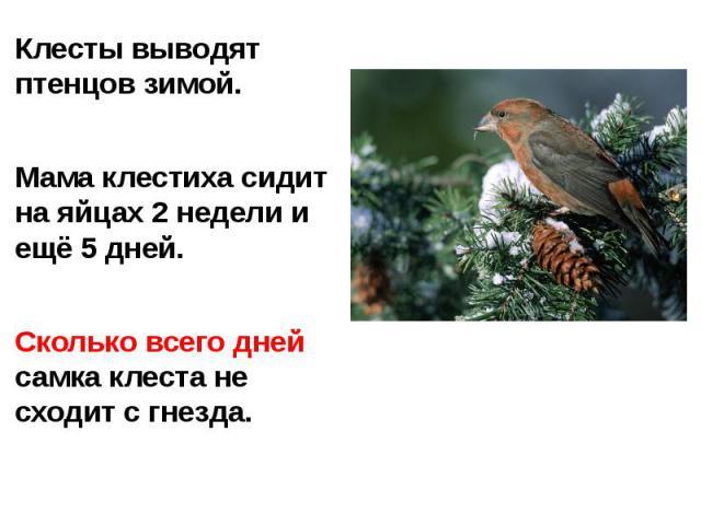 Клесты выводят птенцов зимой.Мама клестиха сидит на яйцах 2 недели и ещё 5 дней.Сколько всего дней самка клеста не сходит с гнезда.