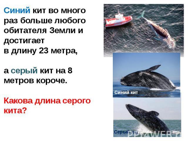 Синий кит во много раз больше любого обитателя Земли и достигает в длину 23 метра,а серый кит на 8 метров короче.Какова длина серого кита?