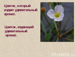 Цветок, которыйиздает удивительный аромат.Цветок, издающий удивительный аромат.