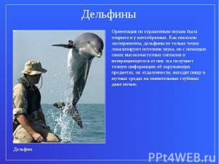 ДельфиныОриентация по отраженным звукам была открыта и у китообразных. Как показ