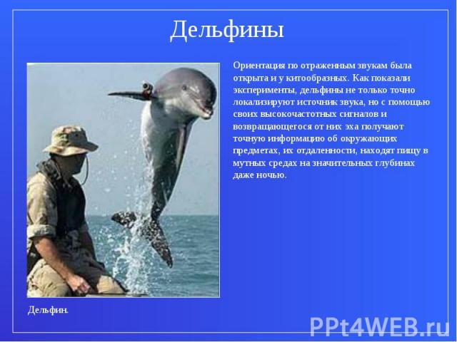 ДельфиныОриентация по отраженным звукам была открыта и у китообразных. Как показали эксперименты, дельфины не только точно локализируют источник звука, но с помощью своих высокочастотных сигналов и возвращающегося от них эха получают точную информац…