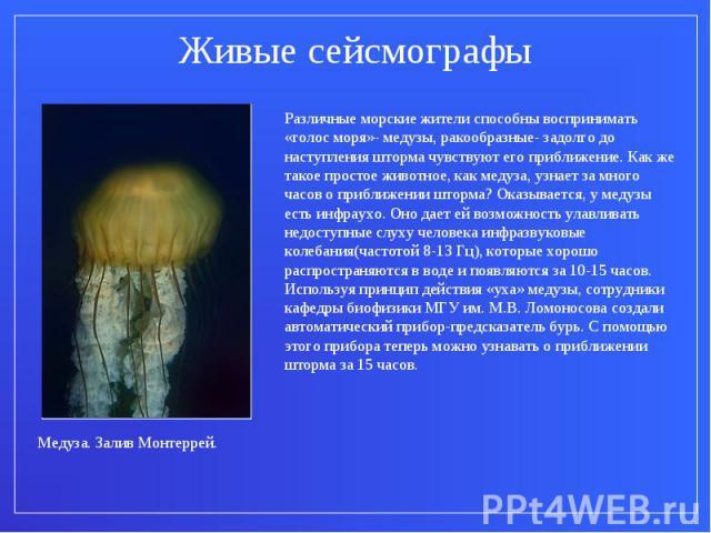 Живые сейсмографыРазличные морские жители способны воспринимать «голос моря»- медузы, ракообразные- задолго до наступления шторма чувствуют его приближение. Как же такое простое животное, как медуза, узнает за много часов о приближении шторма? Оказы…
