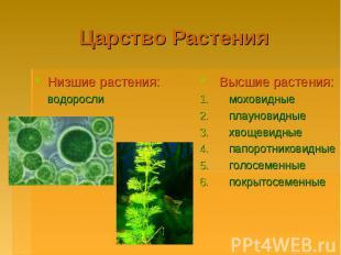 Царство РастенияНизшие растения: водорослиВысшие растения: моховидные плауновидн