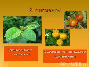 2. пигментыЗелёный пигмент – хлорофиллОранжевые, желтые, красныекаротиноиды
