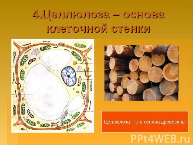4.Целлюлоза – основа клеточной стенкиЦеллюлоза – это основа древесины