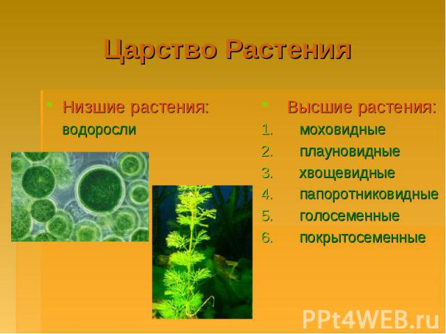 Царство РастенияНизшие растения: водорослиВысшие растения: моховидные плауновидные хвощевидные папоротниковидные голосеменные покрытосеменные