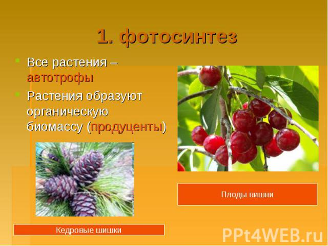 1. фотосинтезВсе растения – автотрофыРастения образуют органическую биомассу (продуценты)