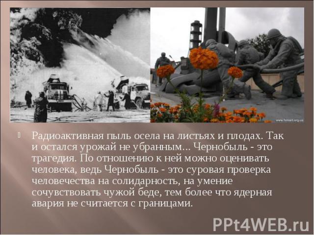 Радиоактивная пыль осела на листьях и плодах. Так и остался урожай не убранным... Чернобыль - это трагедия. По отношению к ней можно оценивать человека, ведь Чернобыль - это суровая проверка человечества на солидарность, на умение сочувствовать чужо…
